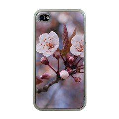 Cherry Blossoms Apple Iphone 4 Case (clear) by trendistuff