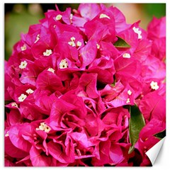Bougainvillea Canvas 20  X 20   by trendistuff