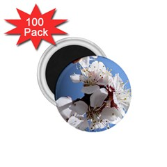 Apricot Blossoms 1 75  Magnets (100 Pack)  by trendistuff