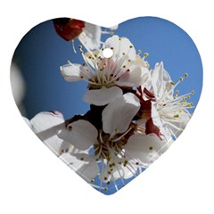 Apricot Blossoms Heart Ornament (2 Sides) by trendistuff