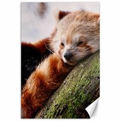 Red Panda Canvas 20  X 30   by trendistuff