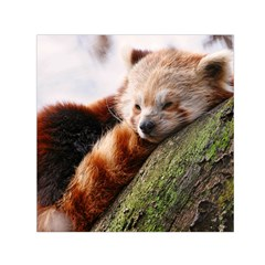 Red Panda Small Satin Scarf (square)  by trendistuff