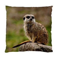 Meerkat Standard Cushion Case (one Side)  by trendistuff