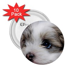 SAD PUPPY 2.25  Buttons (10 pack)  by trendistuff