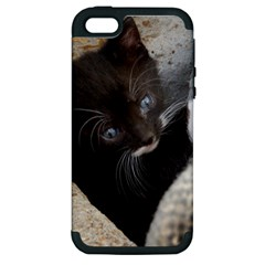 Pretty Blue Eyed Kitty Apple Iphone 5 Hardshell Case (pc+silicone) by trendistuff