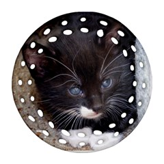 Kitty In A Corner Round Filigree Ornament (2side) by trendistuff