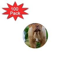 Cute Wrinkly Puppy 1  Mini Buttons (100 Pack)  by trendistuff
