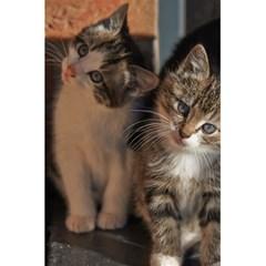 Cute Kitties 5 5  X 8 5  Notebooks by trendistuff