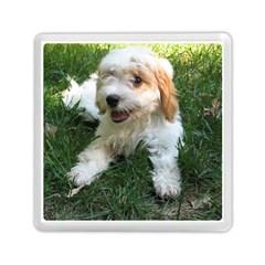 Cute Cavapoo Puppy Memory Card Reader (square)  by trendistuff