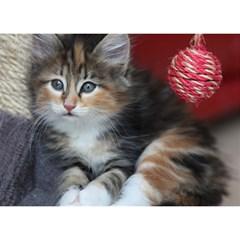 Comfy Kitty Birthday Cake 3d Greeting Card (7x5)  by trendistuff