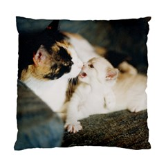 Calico Cat And White Kitty Standard Cushion Case (one Side)  by trendistuff