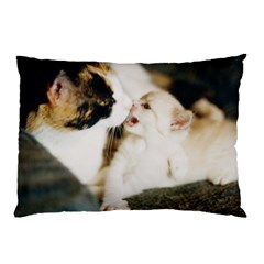 Calico Cat And White Kitty Pillow Cases by trendistuff