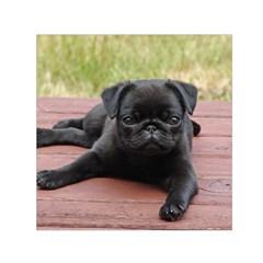 Alert Pug Puppy Small Satin Scarf (square)  by trendistuff