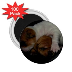 Adorable Baby Puppies 2 25  Magnets (100 Pack)  by trendistuff