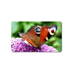 Peacock Butterfly Magnet (name Card) by trendistuff