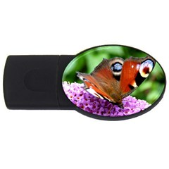 Peacock Butterfly Usb Flash Drive Oval (4 Gb)  by trendistuff