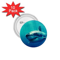 GREAT WHITE SHARK 1 1.75  Buttons (10 pack) by trendistuff