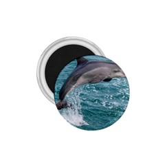 Dolphin 1 75  Magnets by trendistuff
