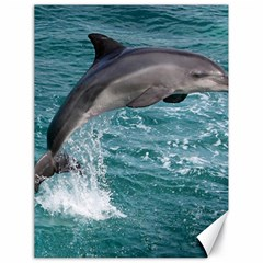 Dolphin Canvas 18  X 24
