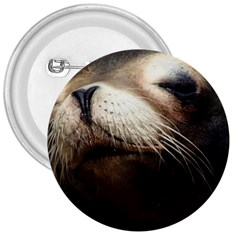 CUTE SEA LION 3  Buttons by trendistuff