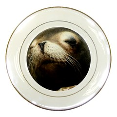 Cute Sea Lion Porcelain Plates