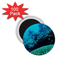 Coral Reefs 2 1 75  Magnets (100 Pack)  by trendistuff
