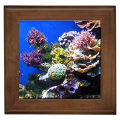 Coral Outcrop 1 Framed Tiles by trendistuff