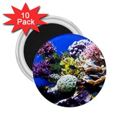 Coral Outcrop 1 2 25  Magnets (10 Pack)  by trendistuff