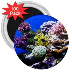 Coral Outcrop 1 3  Magnets (100 Pack) by trendistuff