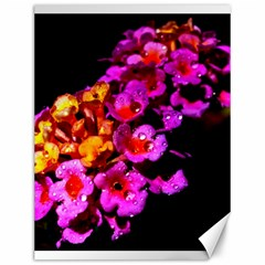 Lantanas Canvas 12  X 16   by timelessartoncanvas