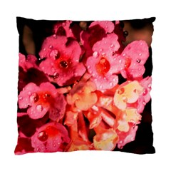 Dsc 0117666565 Standard Cushion Case (one Side)  by timelessartoncanvas