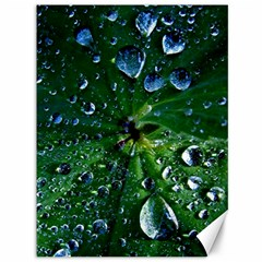Morning Dew Canvas 36  X 48