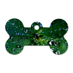 Morning Dew Dog Tag Bone (two Sides)
