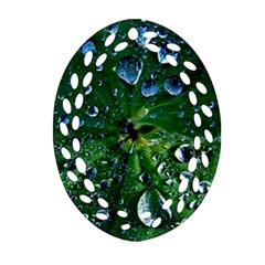 Morning Dew Oval Filigree Ornament (2 Side)  by Costasonlineshop
