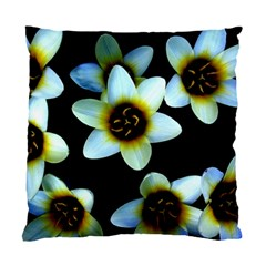 Light Blue Flowers On A Black Background Standard Cushion Case (one Side)