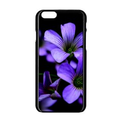 Springtime Flower Design Apple Iphone 6/6s Black Enamel Case by timelessartoncanvas