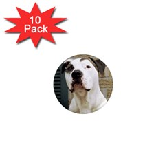Pit Bull T Bone 2015/05/25 1  Mini Magnet (10 Pack)  by ButThePitBull