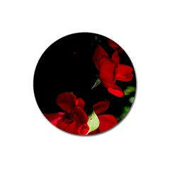 Roses 1 Magnet 3  (round) by timelessartoncanvas