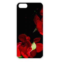 Roses 1 Apple Iphone 5 Seamless Case (white) by timelessartoncanvas