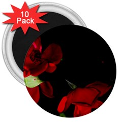 Roses 2 3  Magnets (10 Pack)  by timelessartoncanvas