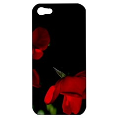 Roses 2 Apple Iphone 5 Hardshell Case by timelessartoncanvas