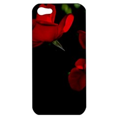 Roses 3 Apple Iphone 5 Hardshell Case by timelessartoncanvas
