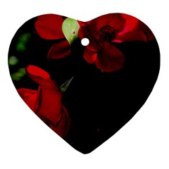 Roses 4 Ornament (heart)  by timelessartoncanvas
