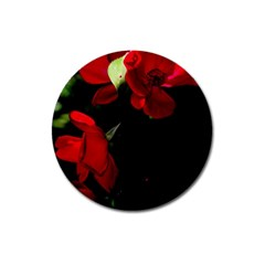 Roses 4 Magnet 3  (round) by timelessartoncanvas