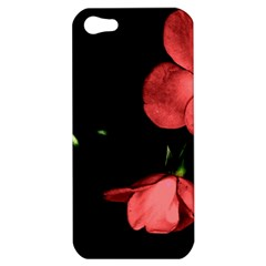 Mauve Roses 1 Apple Iphone 5 Hardshell Case by timelessartoncanvas