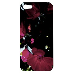 Mauve Pink Roses Apple Iphone 5 Hardshell Case by timelessartoncanvas