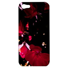 Pink Roses Apple Iphone 5 Hardshell Case by timelessartoncanvas