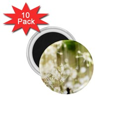 Little White Flowers 1 75  Magnets (10 Pack)  by timelessartoncanvas