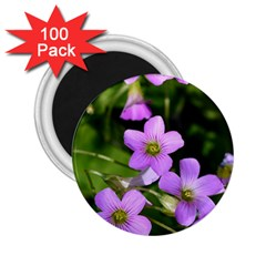 Little Purple Flowers 2 25  Magnets (100 Pack)  by timelessartoncanvas