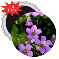 Little Purple Flowers 3  Magnets (10 Pack)  by timelessartoncanvas